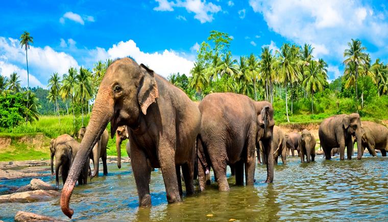 SriLanka_Shutterstock1 (Copiar)