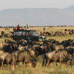 Rekero-Camp-Wildebeest