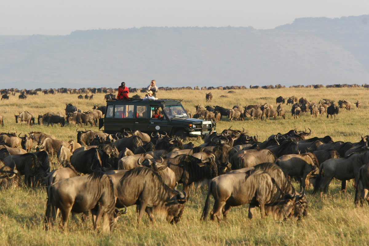 Rekero-Camp-Wildebeest