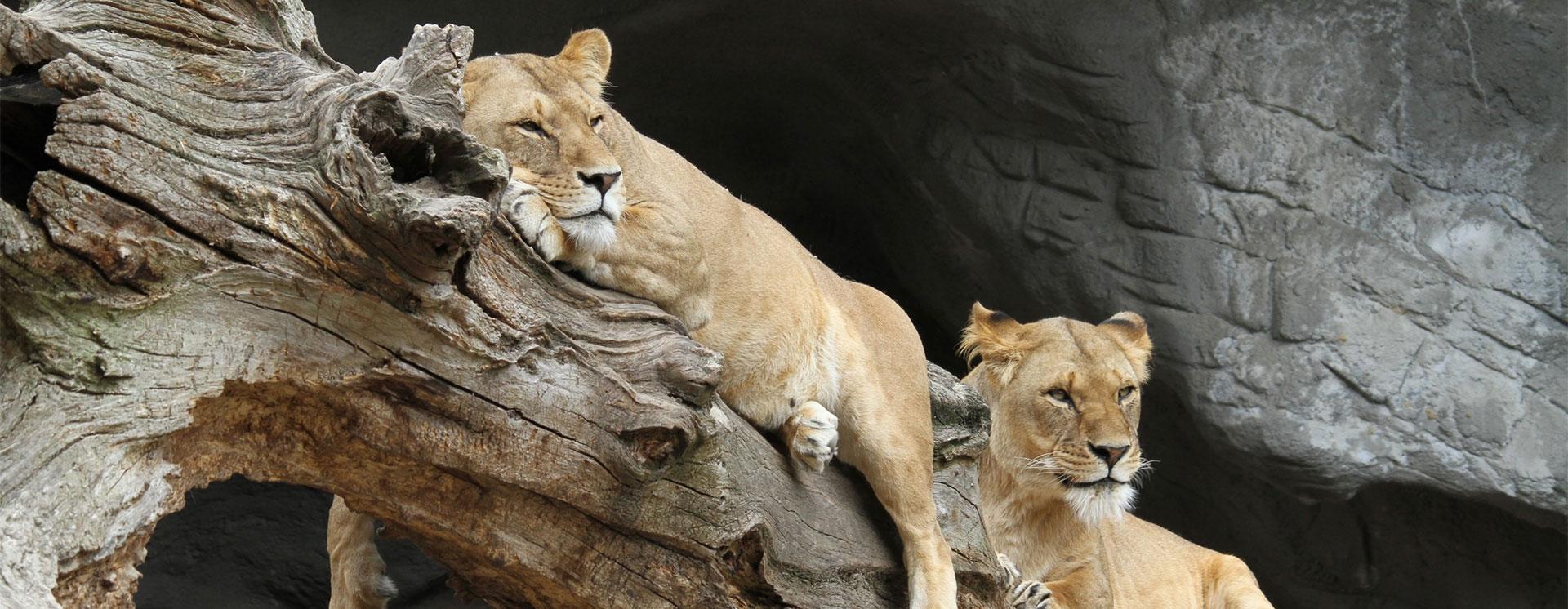 banner_safari