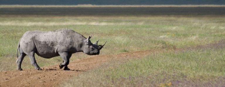 banner_safari1