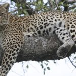 banner_safari5