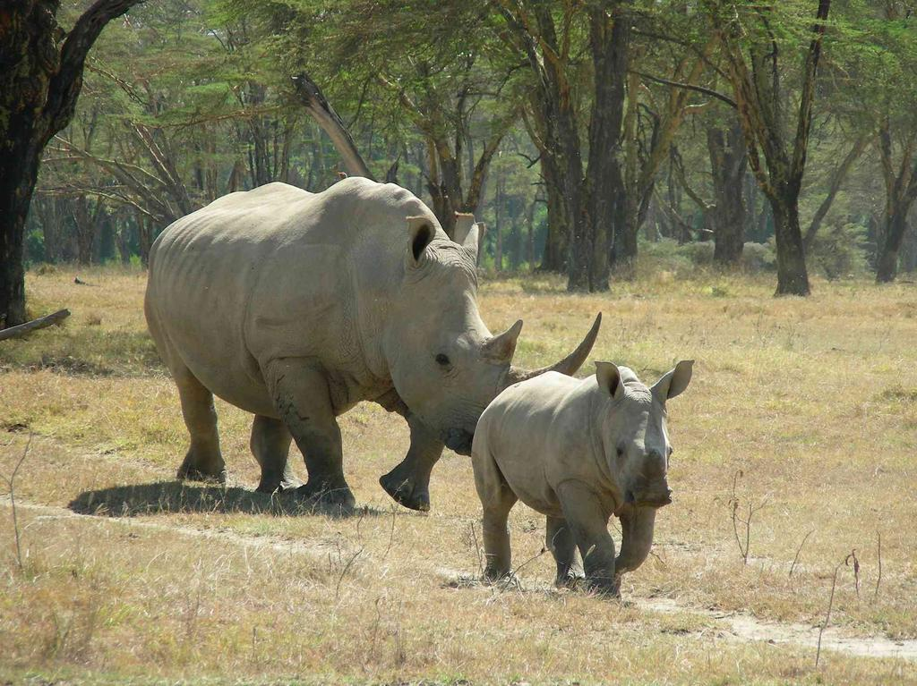 rhino-in-lake-nakuru-national-park_943473_l